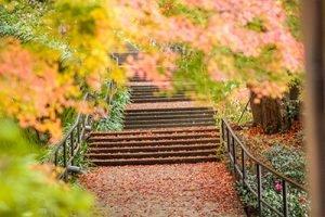 Herbstimpression Infrarotheizung