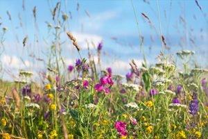 Blumenwiese Infrarotheizung