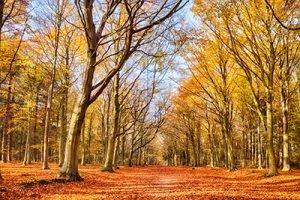 Herbstwald Infrarotheizung