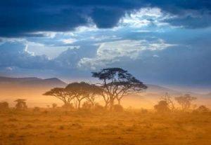afrikanische Savanne Infrarotheizung