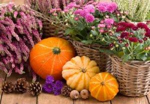 Herbstblumen und Kürbisse Infrarotheizung