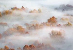 Wald im Nebel Infrarotheizung