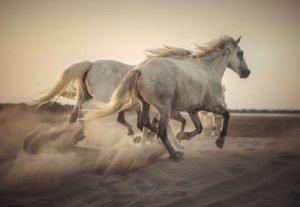 Camargue Pferde Infrarotheizung