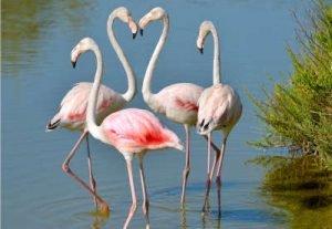 vier Flamingos Infrarotheizung